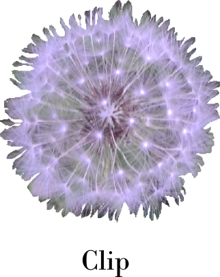 clip of dandelion puff